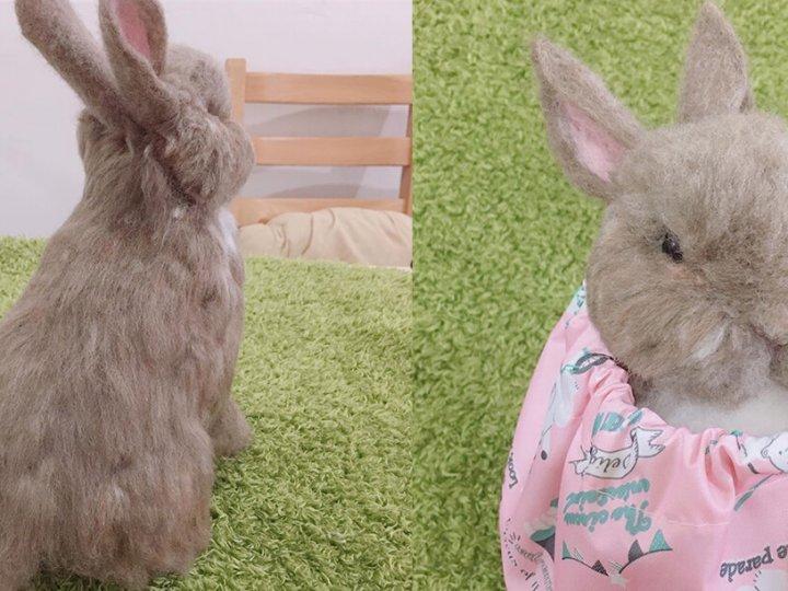 【羊毛氈教學花絮】客製化羊毛氈教學-QQ兔寶全身擬真作品